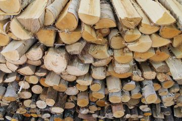 Soft Wood Logs